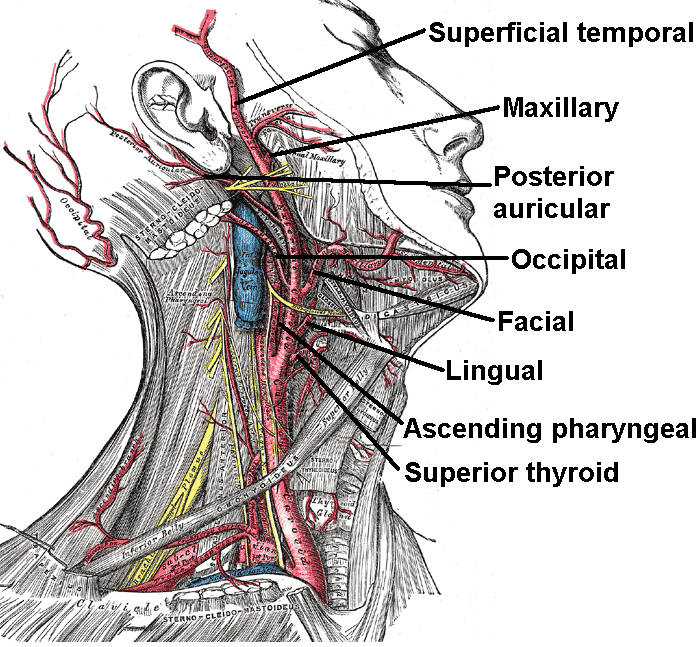 Occipital Artery 301 Moved Permanently